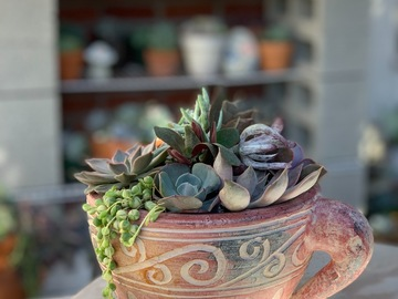 Selling: Succulent arrangement in Teacup Planter