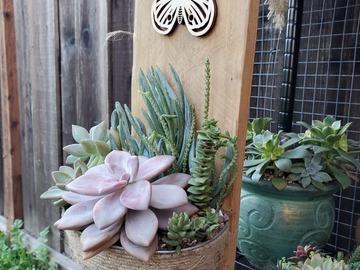 Selling: Custom Succulent Arrangement