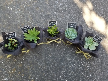 Selling: Succulents gifts
