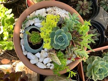 Selling: Pot in the pot succulent arrangement