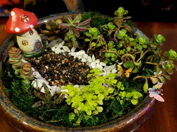 Selling: Succulent arrangement