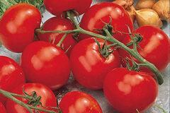 Selling: Better Boy Tomato
