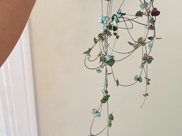 Selling: String of hearts- long