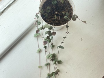Selling: String Of Hearts