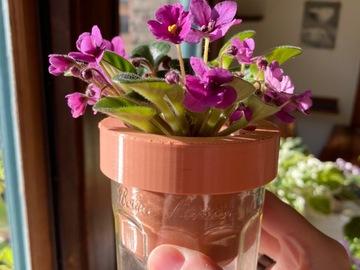 Selling: African violet Saintpaulia 'Jolly Kid'