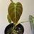 Plantprerogative